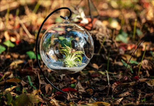 terariu-planta-aeriana-glob-nisip-gri-greenarium_pizap