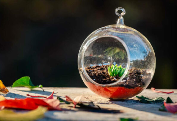 terariu-planta-suculenta-glob-sticla-greenarium_pizap