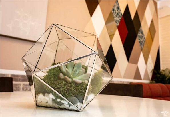 terariu-planta-suculenta-icosaedru-argintiu_pizap